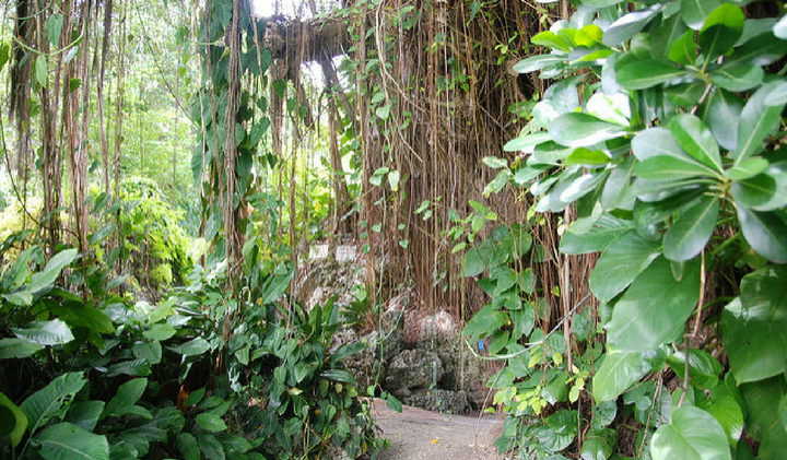 Andromeda Botanical Gardens