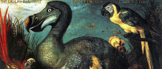 The Dodo in Mauritius - Its metabolic processes are now history