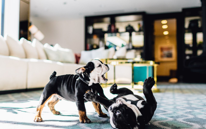 Hotels with dogs: The London