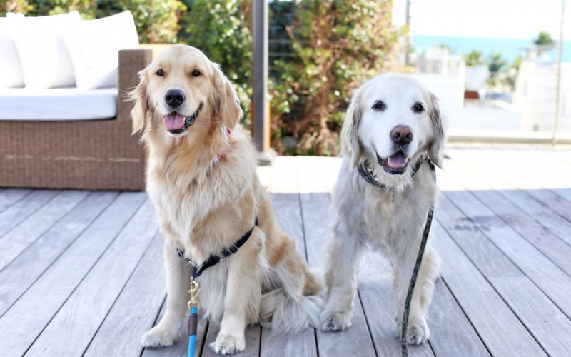 Hotels with dogs: The Betsy Hotel